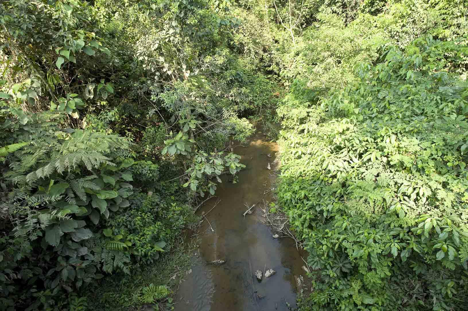 Pantano con presencia de vegetación de tipo arbustos.